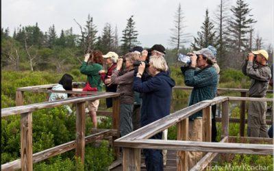 Birding and Wildlife Watching