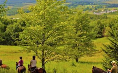 Hay! Enjoy Canaan Valley Horseback Riding