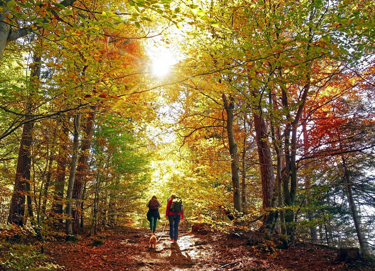 Photo of people hiking in a forest in the fall
