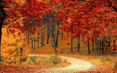Leaf Peepers Festival Weekend Activities
